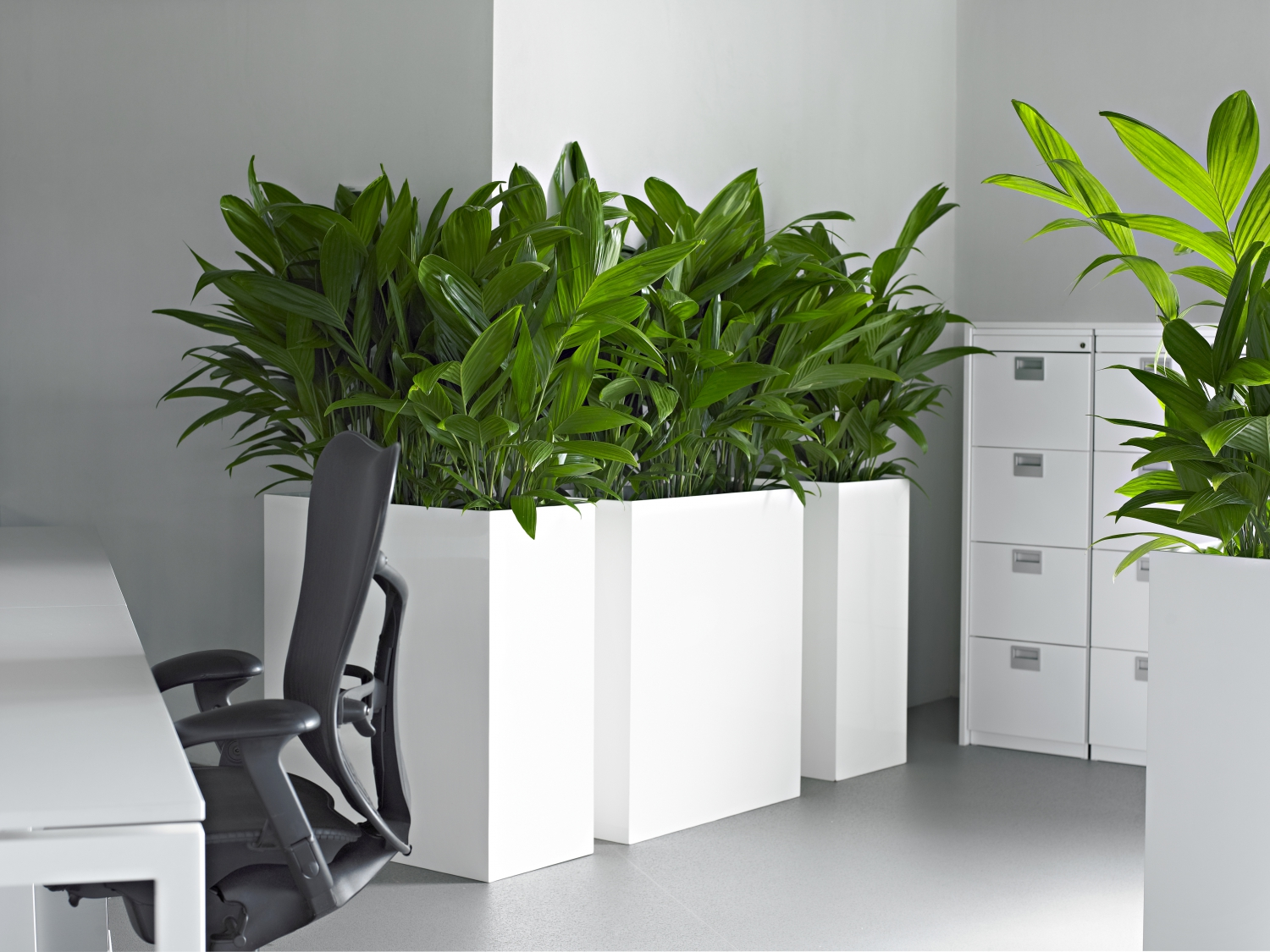 barrier plants create a clear privacy area with plants. Black Bedroom Furniture Sets. Home Design Ideas
