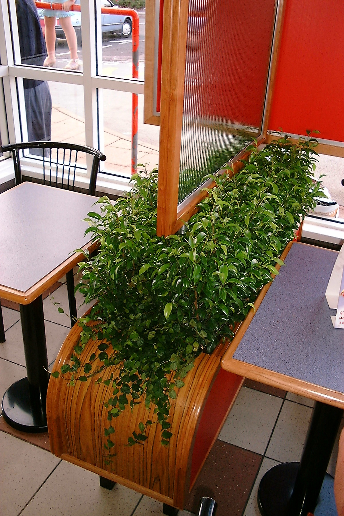 Barrier Plants Create A Clear Privacy Area With Plants