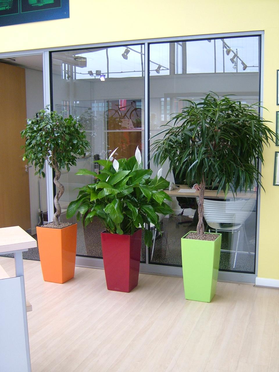 Living plants rent indoor large living plants - Enhancing work efficiency home indoor plants ...