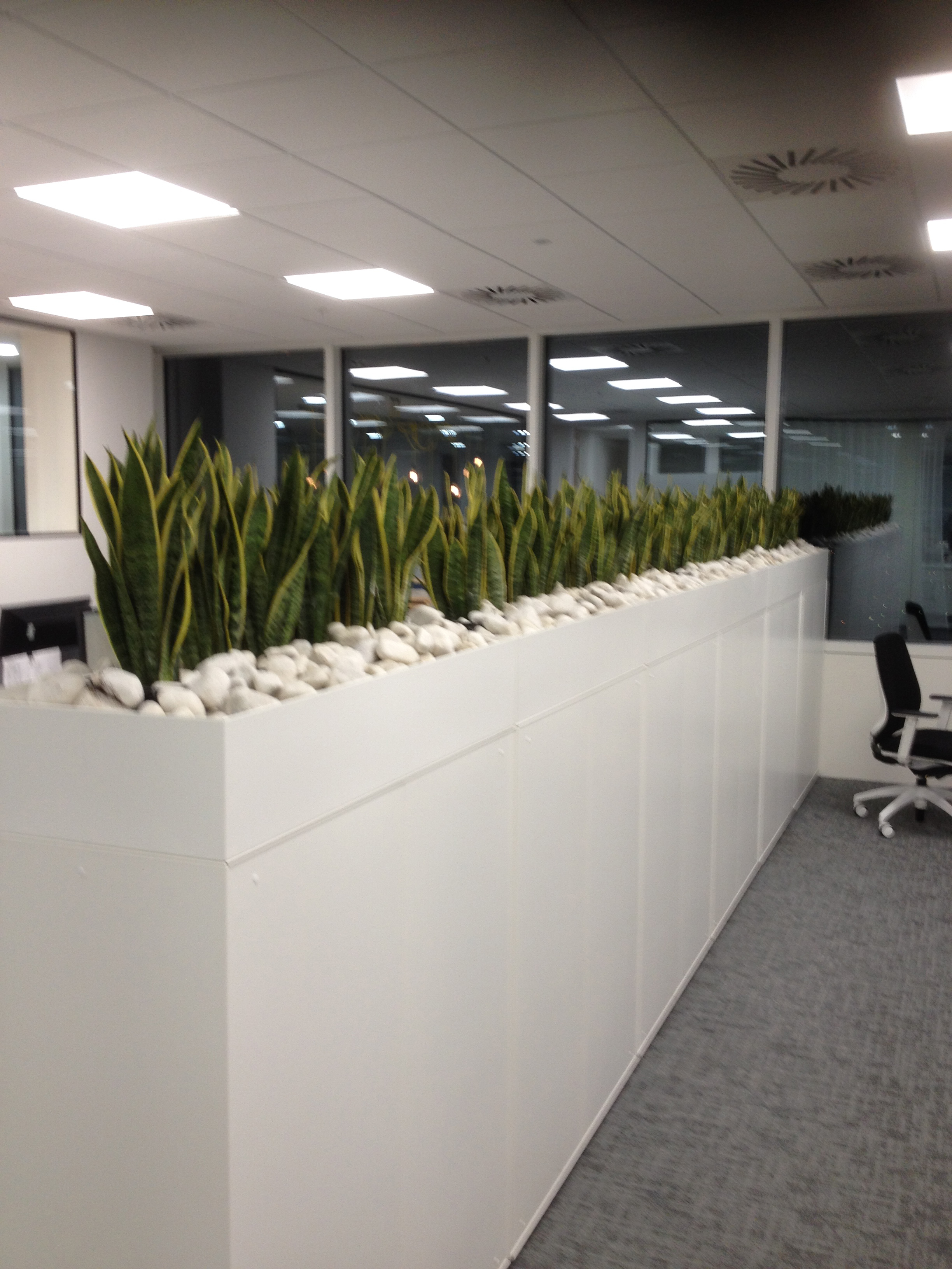 Office plants - Interior plant maintenance contract ...