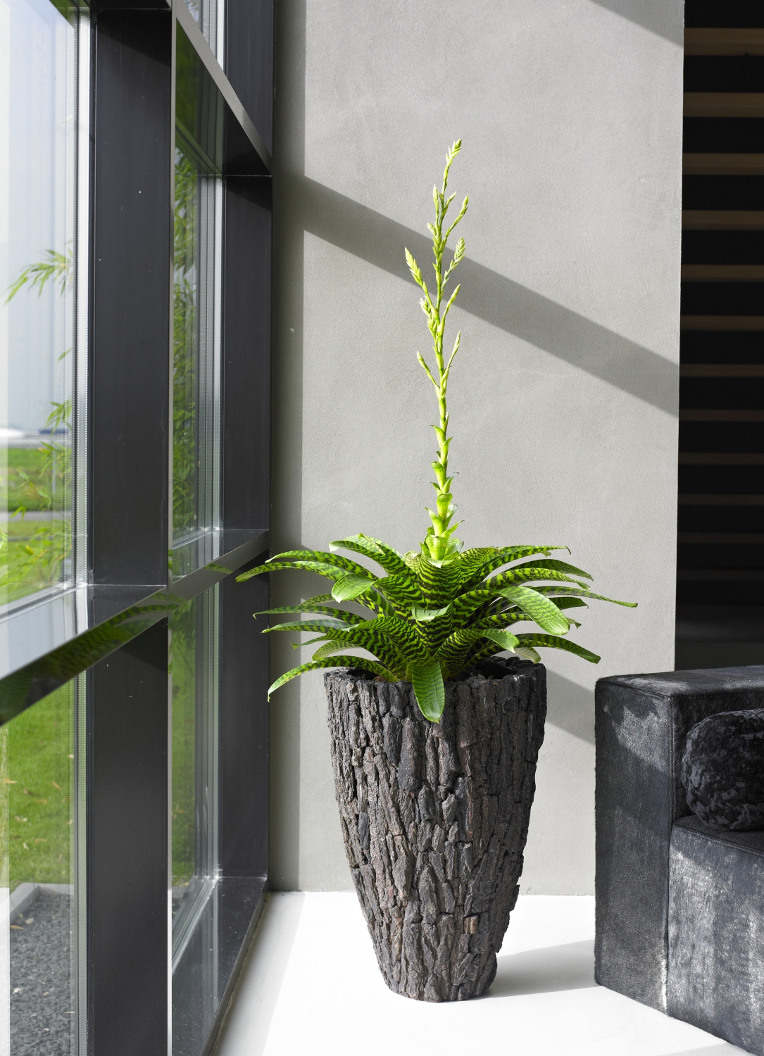 Reception Plants Indoor Plant Displays For Your Entrance