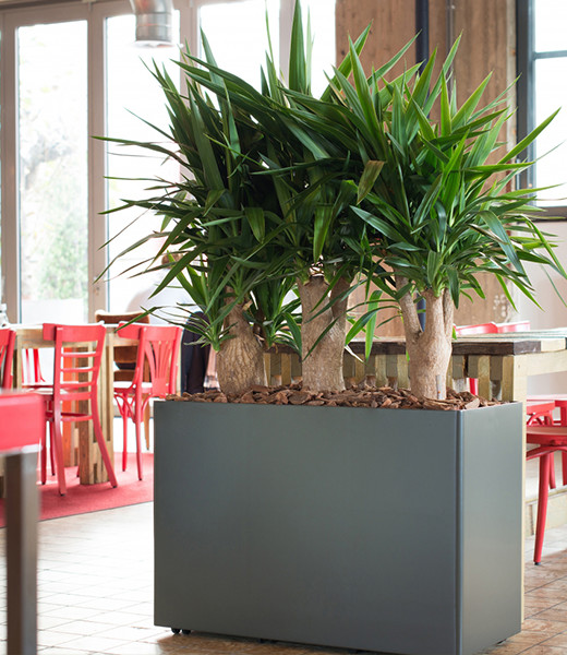 buy or rent plants for your office deedman plants